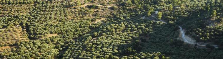 Campos con plantaciones de olivos en las montañas de la isla de Creta. foto