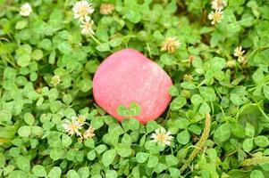 Manzana roja madura con una capa blanca natural sobre la hierba verde foto