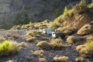 Bee hives in a mountainous area at dusk photo