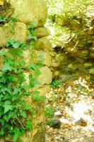 Ivy en un antiguo muro de piedra en verano en un día soleado foto