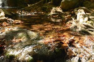 un arroyo que atraviesa las raíces desnudas de los árboles en un acantilado rocoso y hojas de otoño caídas foto