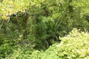 denso bosque tropical en grecia foto