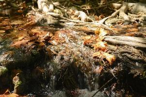 A stream running through the bare roots of trees in a rocky cliff and fallen autumn leaves photo