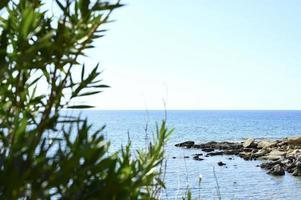 Vista del paisaje marino a través de la rama de las plantas. foto