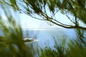 Vista del paisaje marino a través de la rama de pinos y arbustos verdes. foto
