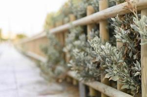 valla de madera decorativa y arbustos verdes blancos foto