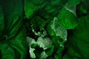 Texture of giant burdock leaves photo