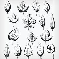 Silhouette Plant Leaves, Stencil Vector Illustration Drawing
