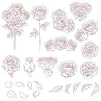 Sketch of Flower Roses Hand Drawn, Outline Doodle Isolated Vector Drawing