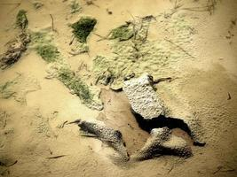 musgo, palos y pastos patrones naturales en la arena foto