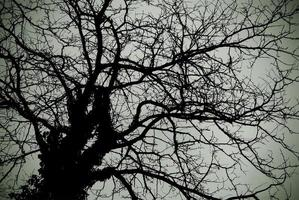 Silhouette of a bare tree photo