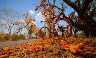 A bike parked on the road with fall foliage photo
