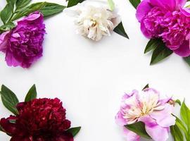 flores de peonía sobre un fondo blanco foto