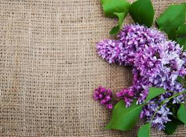 Flores de color lila sobre un antiguo fondo de arpillera foto