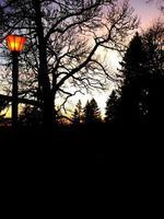 silueta de árboles y una linterna brillante foto