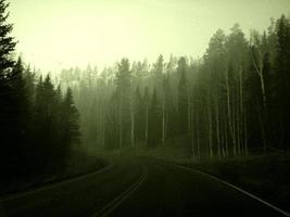 en el camino a través de un bosque neblinoso foto