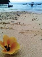 Close up of a yellow flower on the beach photo
