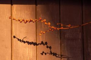 Dry plant in direct light with shadows photo