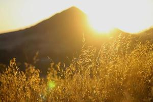 Dry grasses in the hills of California during golden hour photo