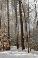 tormenta de nieve en un bosque