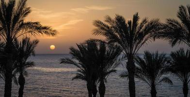 playa tropical al atardecer foto