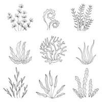 colección de algas. plantas en el mar. vector