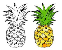 Pineapple fruits vector Illustration. Object isolated on white background. Doodle style. Cloth design.