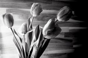 Fondo de flor de tulp blanco y negro con fondo de textura de madera foto