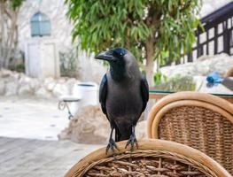Black raven sitting on a wooden chair photo