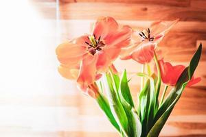 Flores de tulipán abierto en la habitación con fondo de pared de madera foto