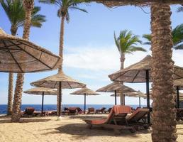 Palm trees and wooden umbrellas and lounging chairs on a beach photo