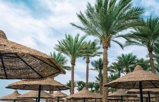 Umbrellas and palm trees photo