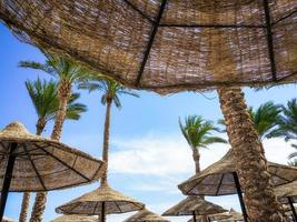 Wooden umbrellas and palm trees photo