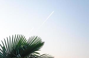 Airplane contrails and palm leaves photo