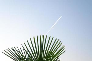 Tropical plant leaves and airplane contrails photo
