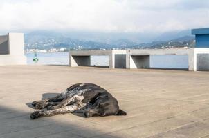 perro tendido en el suelo cerca del agua foto