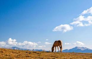 Horse eating grass on a mountain