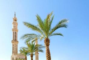 Mosque and green palm trees photo