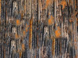 Close-up of tree bark for background or texture. photo