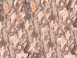 primer plano, de, panel de madera, para, plano de fondo, o, textura foto