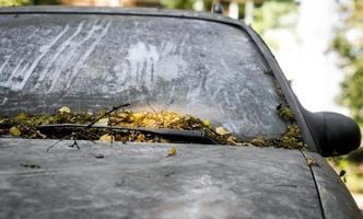 Abandoned car covered with leaves photo
