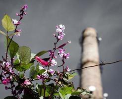 Flores en el fondo de la chimenea de la fábrica y el cielo gris sombrío foto