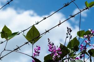 Barbed wire with flowers