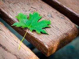 Green maple leaf on an old bench in a park close-up photo
