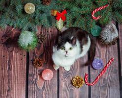 gato y arbol de navidad foto