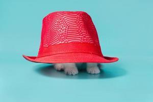 Kitten under a red hat photo