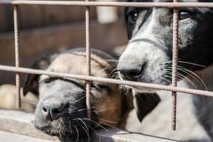 perros en una jaula foto