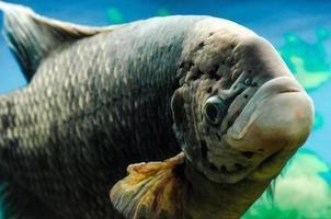pez en un tanque foto