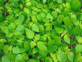 parche de hierba verde de fondo o textura foto