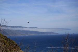 Bird flying over the Pacific Ocean on the coast of California photo
